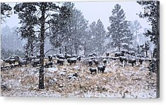January Snow Acrylic Print