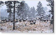 January Snow Acrylic Print