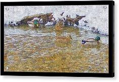 January Thaw At Riverside I Acrylic Print by Rosemarie E Seppala