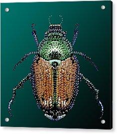 Japanese Beetle Bedazzled II Acrylic Print