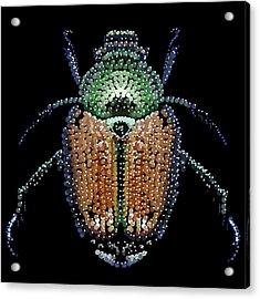 Japanese Beetle Bedazzled Acrylic Print