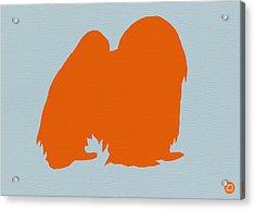Japanese Chin Orange Acrylic Print by Naxart Studio