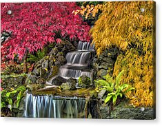 Japanese Laced Leaf Maple Trees In The Fall Acrylic Print by David Gn