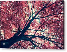 Japanese Maple - Vintage Acrylic Print by Hannes Cmarits