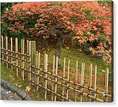 Japanese Maple, Acer Palmatum, In Fall Acrylic Print by William Sutton