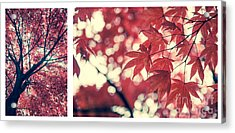 Japanese Maple Collage Acrylic Print by Hannes Cmarits