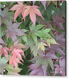 Acrylic Print featuring the photograph Japanese Maple Leaves by Christina Verdgeline