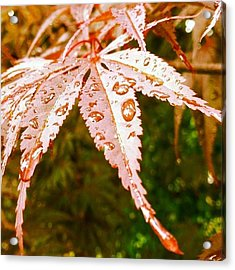 Japanese Maple Leaves Acrylic Print by Marianna Mills