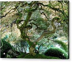 Japanese Maple Tree II Acrylic Print by Athena Mckinzie