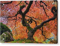Japanese Maple Tree In Fall Acrylic Print