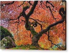 Japanese Maple Tree In Fall Acrylic Print