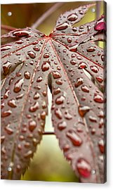 Japanese Maple Tree Leaf Waterdrops Acrylic Print by Bob Noble Photography
