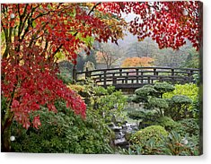Japanese Maple Trees By The Bridge In Fall Acrylic Print