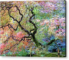 Japanese Maple Acrylic Print by Wendy McKennon
