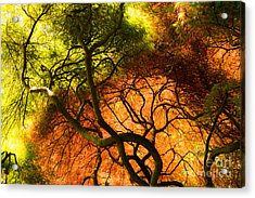 Acrylic Print featuring the photograph Japanese Maples by Angela DeFrias