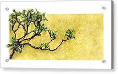 Japanese Pittosporum At The Hakone Gardens Acrylic Print by Suzannah Alexander