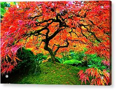 Japanese Red Maple Acrylic Print