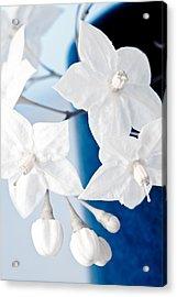 Jasmine Acrylic Print by Frank Tschakert