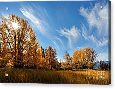 Jasper - Autumn Sky Chief Acrylic Print