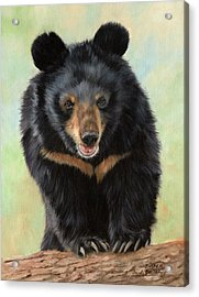 Jasper Moon Bear - In Support Of Animals Asia Acrylic Print by David Stribbling