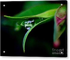 Jasper - Rain Drop Plant Acrylic Print