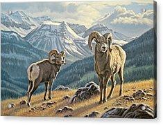 Jasper Rams Acrylic Print