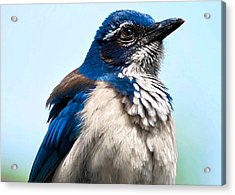 Jay Acrylic Print by Camille Lopez