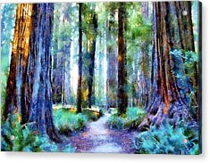 Jedediah Smith Grove Acrylic Print by Kaylee Mason