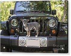 Jeep Dog Acrylic Print by Edward Fielding