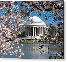 Jefferson Blossoms Acrylic Print by Dale Nelson