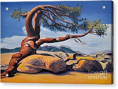 Jeffrey Tree Acrylic Print