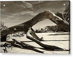Jekyll Island Monster Acrylic Print