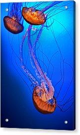 Jelly #1 Acrylic Print