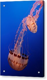 Jelly And Fishy Acrylic Print