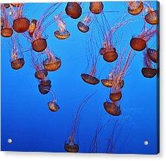 Jelly Dive Acrylic Print by Ashley Van Artsdalen