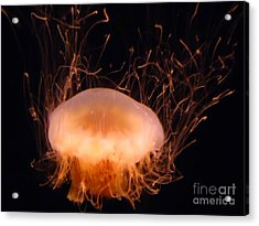 Jelly Electric Acrylic Print by Steed Edwards