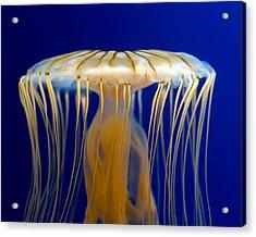 Jelly-fish Acrylic Print
