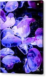 Jelly Time Acrylic Print