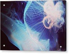 Jellyfish Acrylic Print by Claudia Avila