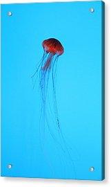 Jellyfish - National Aquarium In Baltimore Md - 12123 Acrylic Print