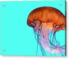 Jellyfish Acrylic Print by Tanias Reign