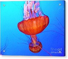 Jellyfish Viii Acrylic Print