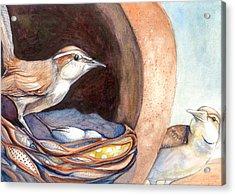 Jenny Wrens Acrylic Print
