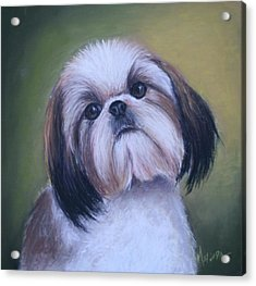 Acrylic Print featuring the painting Jenny Wren Shih Tzu Puppy by Melinda Saminski