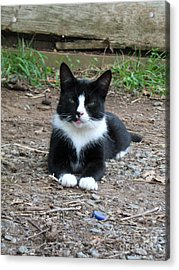 Acrylic Print featuring the photograph Jerry by Wendy Coulson