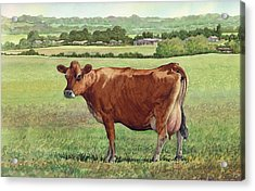 Jersey Cow Acrylic Print by Anthony Forster