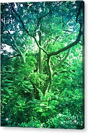 Acrylic Print featuring the photograph Jersey Tree by Denise Tomasura