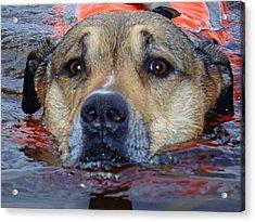Jessie Swimming Acrylic Print