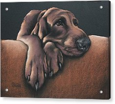 Acrylic Print featuring the pastel Jethro by Cynthia House