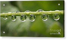 Acrylic Print featuring the photograph Jewel Drops by Inge Riis McDonald